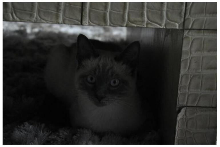 Pazudis kaķis !
