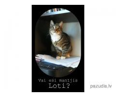 Pazudusi kaķu meitene Lote!