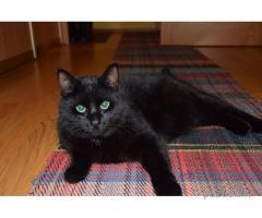 pazudis melns kaķis
