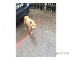 Atrasts suns Mārupē